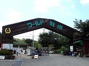 白浜花火大会 2016 日程 穴場、3