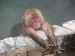 猿(さる)が温泉に入る長野県の地獄谷温泉!時期や宿、周辺スポットは?