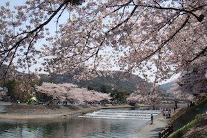 京都 桜 花見 名所 穴場 スポット9