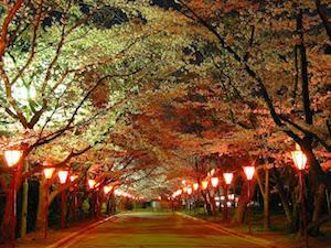 神戸市 桜 名所 穴場  花見 スポット 6
