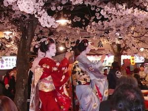 京都 桜 花見 名所 穴場 スポット 4