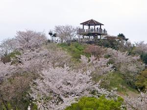和歌山県 桜 穴場 名所 2016 花見 スポット 5