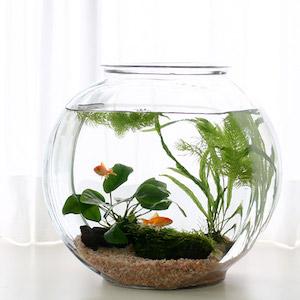 金魚すくいの金魚 飼育 方法  2