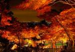 茨城県の紅葉の名所や穴場スポットは?見ごろ時期やライトアップもあるの?