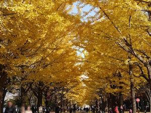 11月 北海道 旅行 イベント 気温 1