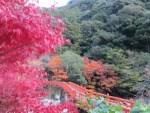 和歌山県の紅葉の名所や穴場スポットは?見ごろ時期やライトアップもあるの?