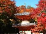 大阪の紅葉の名所や穴場スポットは?見ごろ時期やライトアップもあるの?