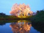 福岡県の桜の名所や穴場は?2018年の花見ができるスポットをご紹介!