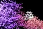 夜桜が綺麗な関西のライトアップスポット!おすすめランキングの紹介!