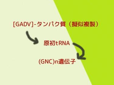GADVタンパク質による擬似的な自己複製へのGNC遺伝子の関与