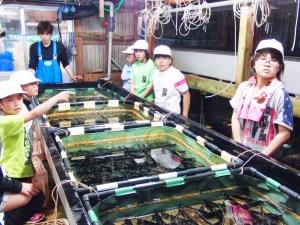 水産授業(アワビへの餌やりを体験)