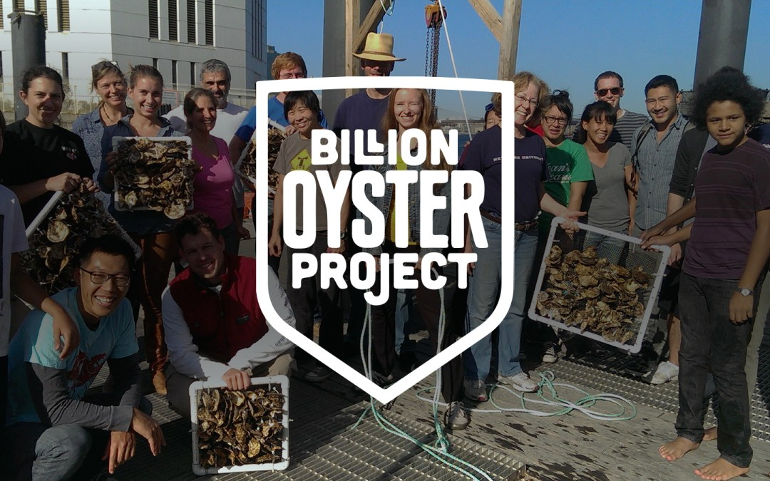 Billion Oysters Project