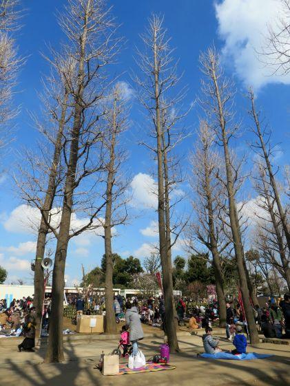 setagaya-plum-festival-hanegi-park-14