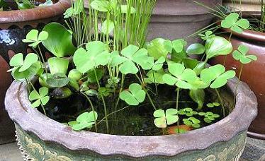 水鉢と植物