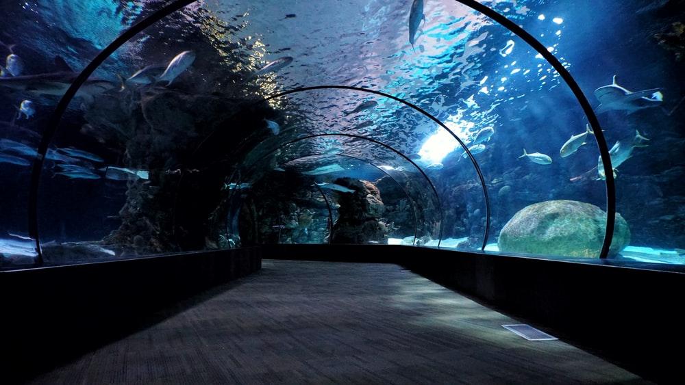 房総半島 水族館