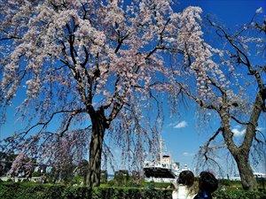車椅子で行く横浜 山下公園・マリンタワー バリアフリー情報
