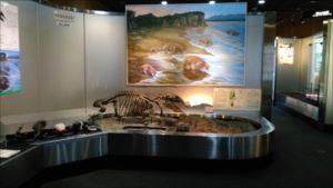 地質標本館バリアフリー情報