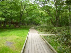 湯ノ湖歩道