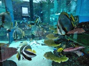 海水魚の展示もあり