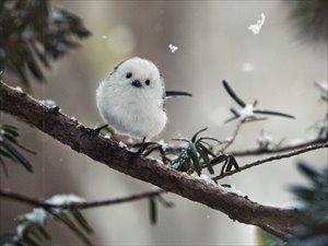 嶋田忠 野生の瞬間 華麗なる鳥の世界