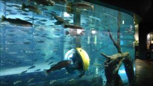 森の中の水族館。山梨県立富士湧水の里水族館 バリアフリー情報