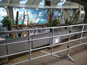 コアラ舎内はフラット構造