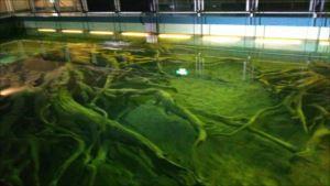 水中展示館のバリアフリー状況