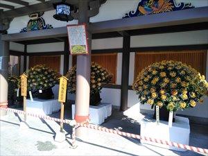 湯島天神菊まつり2019