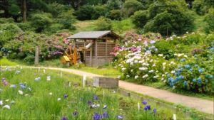 市立横須賀しょうぶ園
