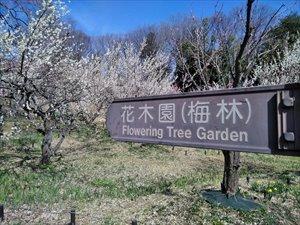 国営武蔵丘陵森林公園 梅林のバリアフリー情報 車椅子観梅ガイド