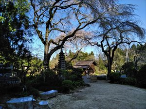 茨城県の一本桜 枝垂れ桜の古木がある 城里町 小松寺バリアフリー情報