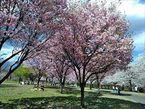 赤城山 みやぎ千本桜の森公園 車椅子利用ガイド