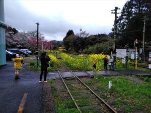 菜の花と桜を楽しめる上総中野駅