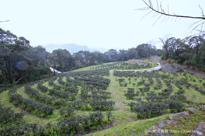 三峽景點推薦|熊空茶園 百年茶園秘境 傳說中難以抵達的世外桃源 新北隱藏版秘密後花園