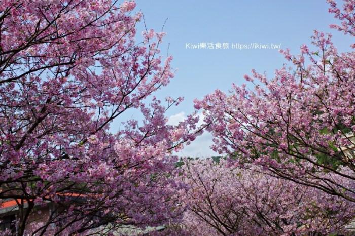 台北櫻花咖啡廳推薦  Orange 橘咖啡賞吉野櫻,滿山谷的櫻花林爆炸,內厝溪櫻花木廊