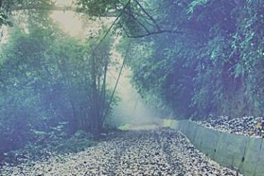 【苗栗旅遊-頭屋】迷霧桐花林間之夢幻桐花步道(必訪秘境)