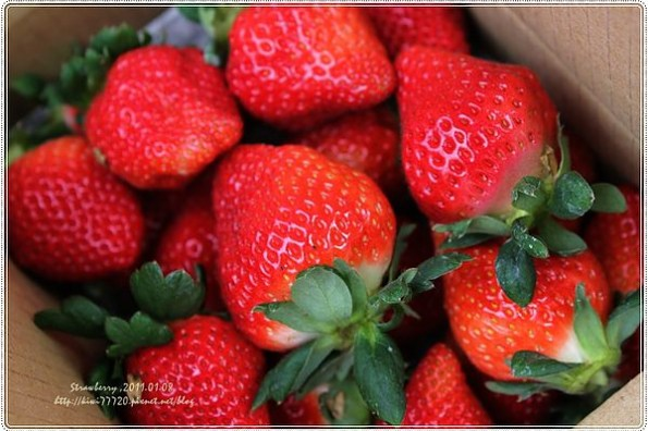 【苗栗大湖景點】大湖採草莓、草莓酒莊文化館、花間集限定草莓餐點(草莓季限定必訪一日遊輕旅行)