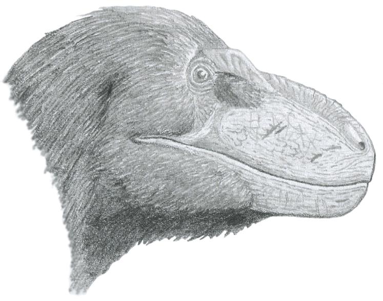 Nanuqsaurus: Polar Bear Lizard