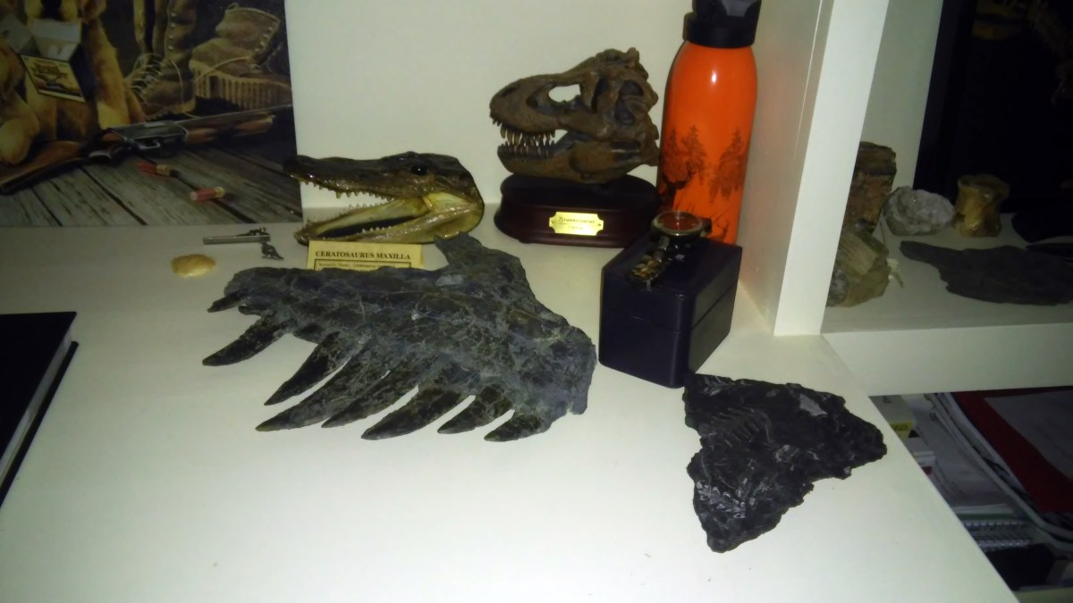 Guest Post: How To Start Your Own Fossil Collection