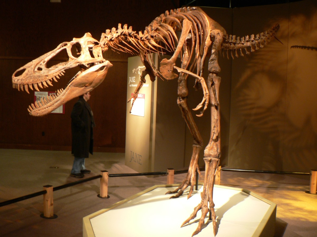 This Week in Dinosaur News: T. rex could turn pretty quickly, Nanotyrannus is probably a juvenile T. rex, and our SVP wrap-up