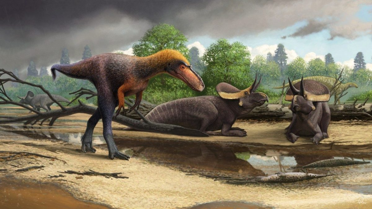 This Week in Dinosaur News: New tyrannosaur Suskityrannus, a potentially new cretaceous stegosaur, and more