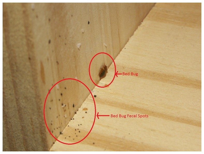 How Much Does A Bed Bug Treatment Cost