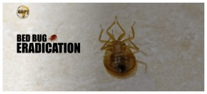 Strongest Bed Bug Killer Home Remedy