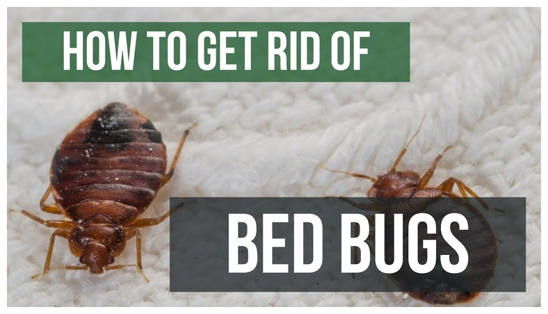Bed Bugs In Ohio Hotels
