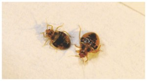 Best Dry Steamer For Bed Bugs