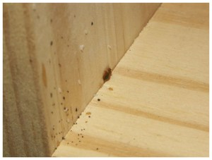 How I Got Rid Of Bed Bugs Myself