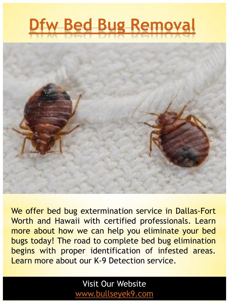 How Much Is An Exterminator For Bed Bugs