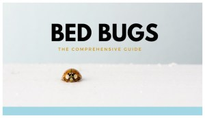Natural Scents That Repel Bed Bugs