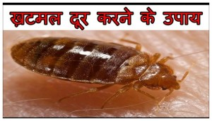 The Best Way To Get Rid Of Bed Bugs Fast