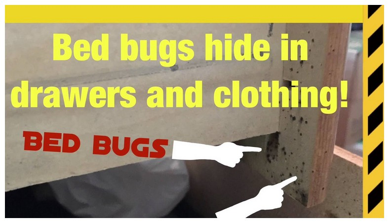 Will Bed Bugs Live In A Wood Furniture